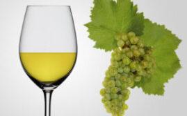 介绍Chardonnay霞多丽,以及不同价位对酒品质的影响