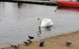 英伦游记 - 如何优雅而不失礼貌地在伦敦喂鸽子